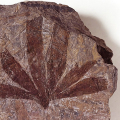 02267-fossil-plant