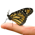02428-butterfly-finger