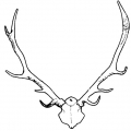 02312-antlers