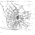 02142-web-spider-damaged