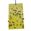 02055-insects-trap