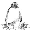 01537-pinguin-mother