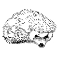 00532-hedge-hog