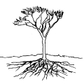 00241-tree-roots-cross-section