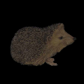 00533-hedge-hog-dark