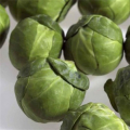 02482-sprouts