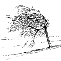 01447-tree-crooked-wind