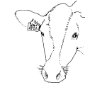 01407-cow-label-ear